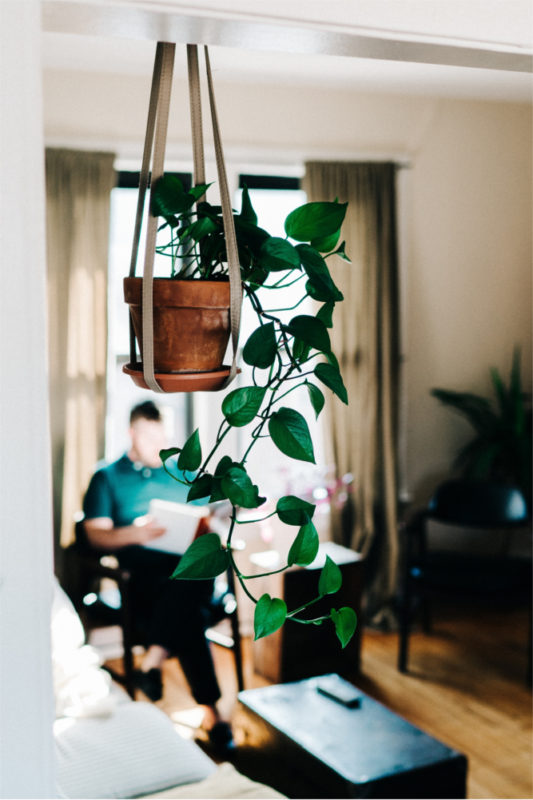 Bring your flat to life with indoor plants